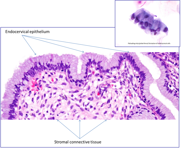 What Is the Main Function of Connective Tissue?